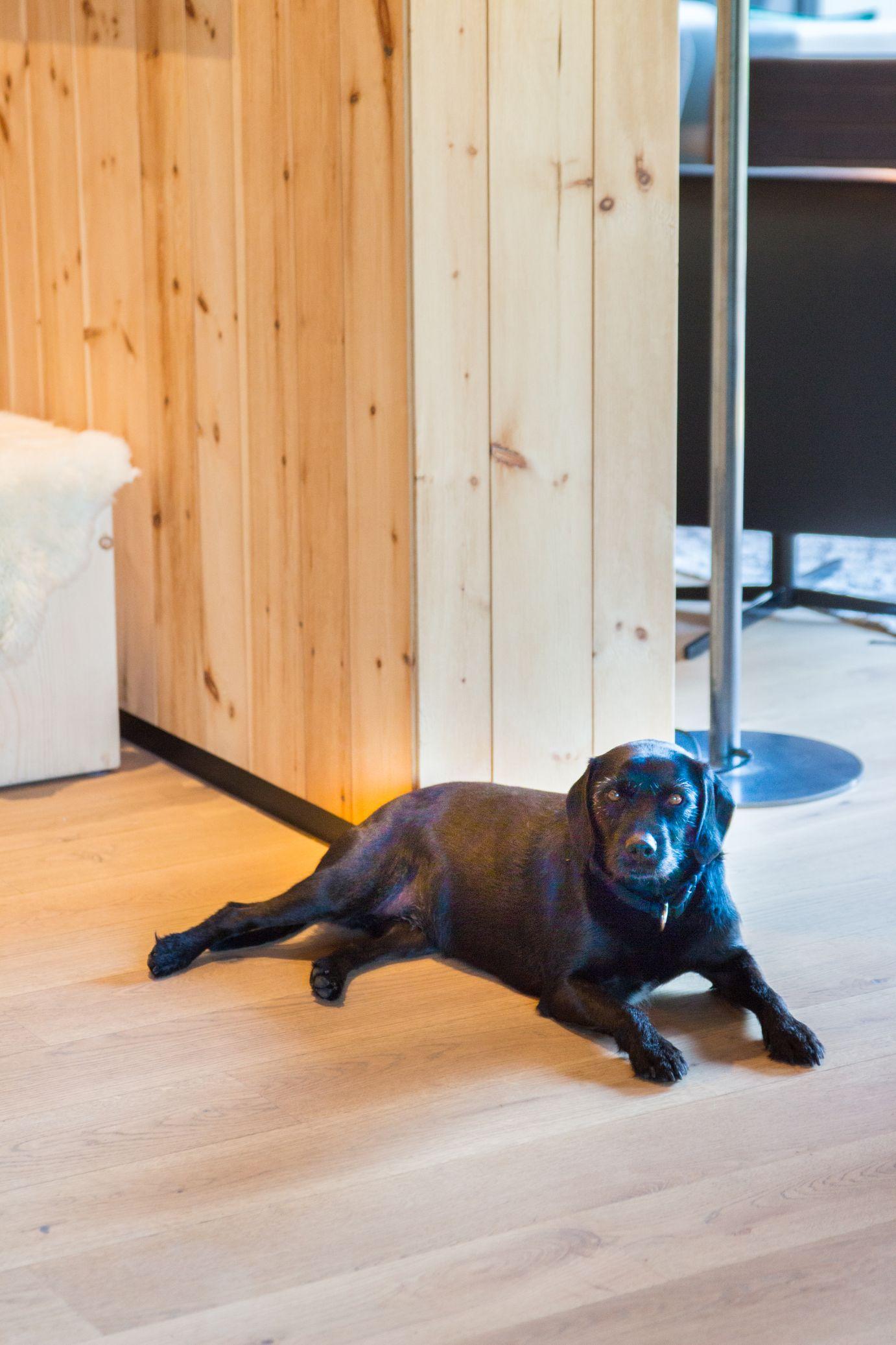 Hotel Pfösl Hund Schätze aus meiner Küche
